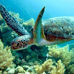 turtle 1