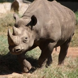 Zimbabwe To Re-Introduce Rhinos Into National Parks