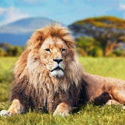 Internet Expresses Outrage At The Death Of Cecil The Lion