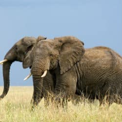 WWF Helps Break Up Major Ivory Trafficking Network