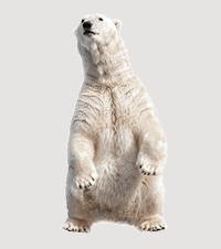 5 Reasons to Adopt a Polar Bear