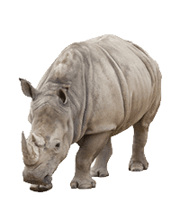 Rhino Adoption
