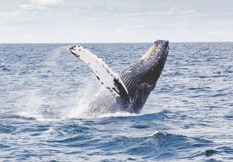 Help WWF's conservation efforts
