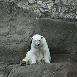 polar bear 5