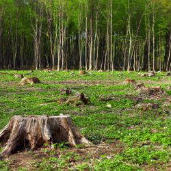 Deforestation In Brazil's Amazon Reaches A Decade Long High