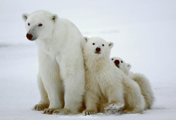 Adopt a Snowy Animal