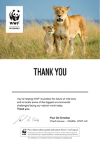 Adopt a Lion Certificate