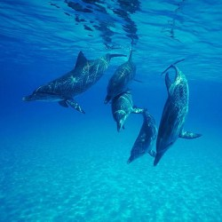 Dolphins Have The Longest Memories In The Animal Kingdom