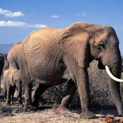 Elephant And Rhino Poaching On The Rise
