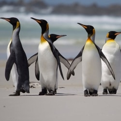 Penguins Only Have Bitter And Salty Taste Receptors
