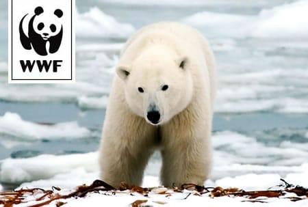WWF Adopt a Polar Bear
