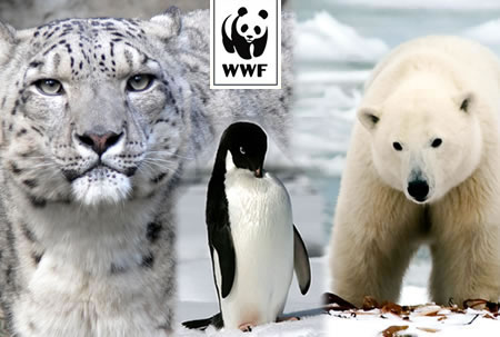 WWF Adopt the Snow Pack