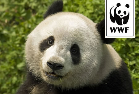 WWF Adopt a Panda