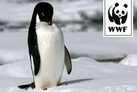 WWF Adopt a Penguin