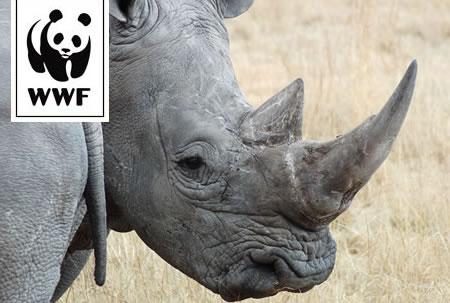 WWF Adopt a Rhino