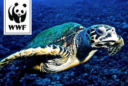 WWF Adopt a Turtle